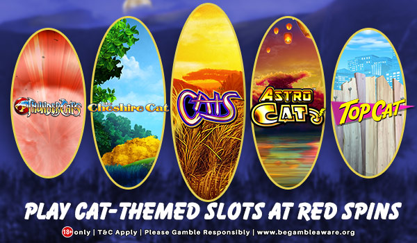 Enjoy Playing Cat - Themed Slots at Red Spins